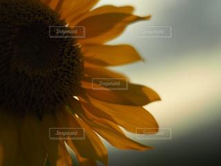夏の日の思い出の写真・画像素材[2108272]