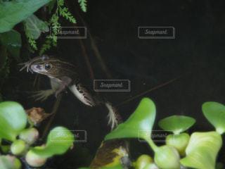 枝に座っているカエルの写真・画像素材[2108273]