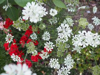 花のクローズアップの写真・画像素材[2108871]