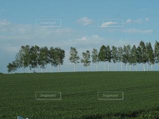 マイルドセブンの丘の写真・画像素材[2157865]