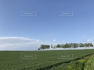マイルドセブンの丘の写真・画像素材[2157866]
