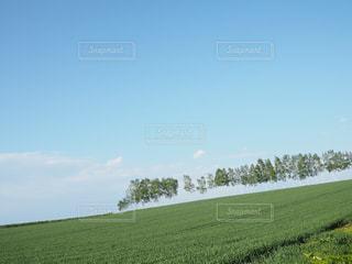 マイルドセブンの丘の写真・画像素材[2157867]