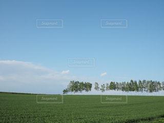 マイルドセブンの丘の写真・画像素材[2157868]