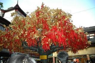 祈りの木の写真・画像素材[2118485]