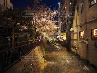街の通りの夜桜の写真・画像素材[2107215]