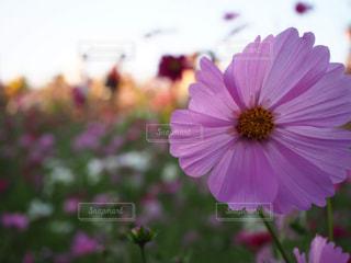 花のクローズアップの写真・画像素材[2108261]
