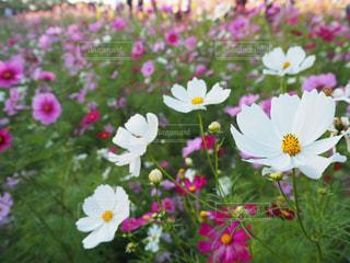 花のクローズアップの写真・画像素材[2108264]