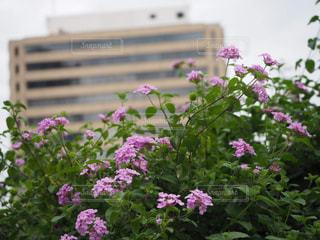 都会の中の花の写真・画像素材[2108266]