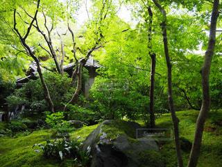 緑豊かな森の中の木の写真・画像素材[2108518]