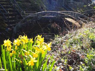 黄色い花と橋の写真・画像素材[3087641]