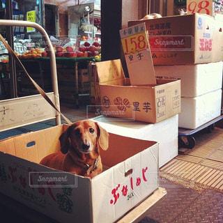 犬の写真・画像素材[164700]