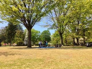 公園でピクニックの写真・画像素材[1382610]