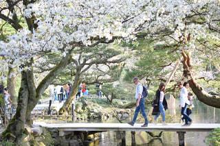 木の隣に立っている人々のグループの写真・画像素材[2119748]