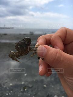 海での楽しいひとときの写真・画像素材[2142966]