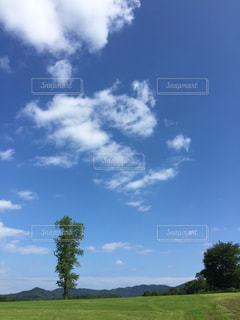 背景に木がある大きな緑の野原の写真・画像素材[2119209]