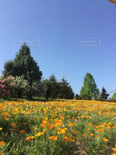 野原の黄色い花の写真・画像素材[2119210]