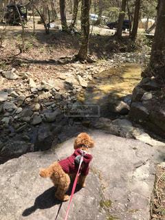 犬とキャンプの写真・画像素材[2109780]