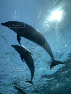 水の中を泳いでいるイルカの写真・画像素材[2110098]