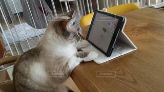 ゲーム中のネコの写真・画像素材[2109948]