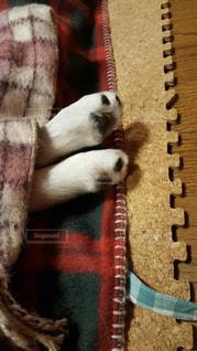 犬の写真・画像素材[2112165]