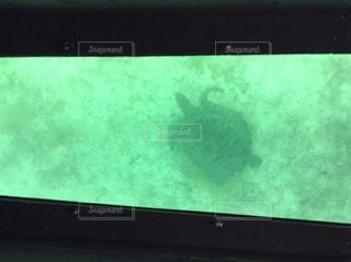 幸運の象徴のウミガメの写真・画像素材[2110185]