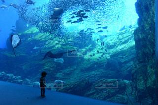まるで水中にいるかのようなの写真・画像素材[2111244]