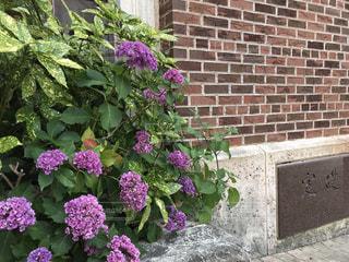 れんが造りの建物と紫陽花の写真・画像素材[2115618]