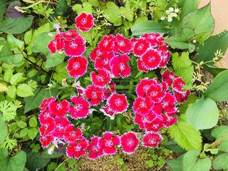 花のクローズアップの写真・画像素材[2113548]