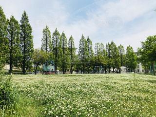 野原の大きな木の写真・画像素材[2118036]