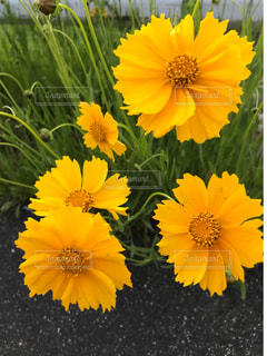 黄色い花の写真・画像素材[2123922]