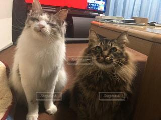 癒しをくれる猫の写真・画像素材[2126014]