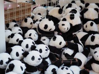 パンダのぬいぐるみづくしの写真・画像素材[2115605]