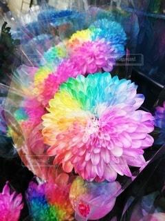 カラフルな花の写真・画像素材[2114544]