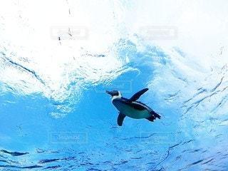 空飛ぶペンギンの写真・画像素材[2117855]