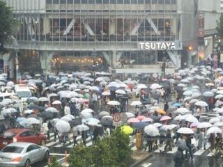 雨の日の渋谷スクランブル交差点の写真・画像素材[2125841]