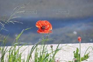 花のクローズアップの写真・画像素材[2113692]