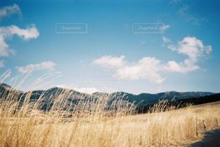 冬季のすすき草原(仙石原)の写真・画像素材[2113789]