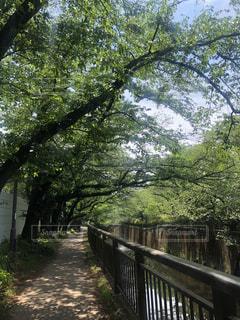 新緑の中川沿いの散歩道の写真・画像素材[2114293]