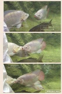 恋人の写真・画像素材[81772]