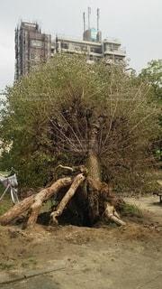 台風被害の写真・画像素材[2115389]