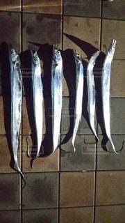 太刀魚の背比べの写真・画像素材[2117615]