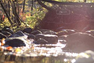 秋の小川の朝の写真・画像素材[2114992]