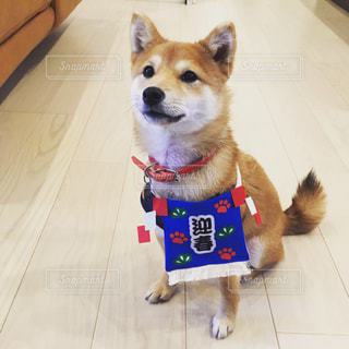迎春犬の写真・画像素材[2115182]