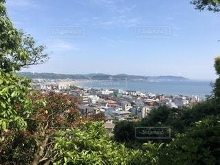 都市が背景にある水域の隣の木の写真・画像素材[2117027]