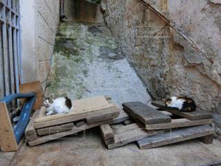 木製のベンチの上に横たわっている猫の写真・画像素材[2118115]