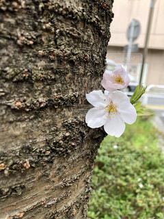 花のクローズアップの写真・画像素材[2124673]