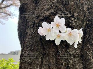 植物の上の白い花の写真・画像素材[2124685]