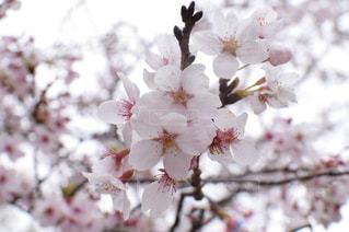 花のクローズアップの写真・画像素材[2116512]