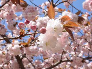 花のクローズアップの写真・画像素材[2117386]