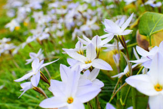白い花の写真・画像素材[2117436]